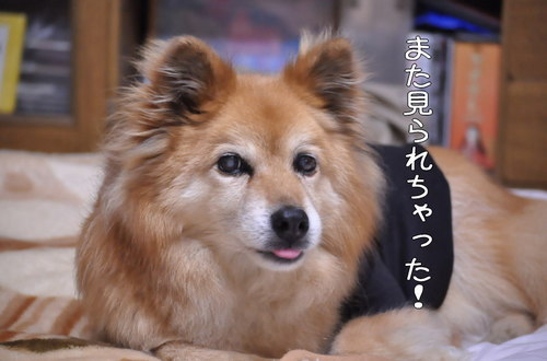 2011_05_28_003.jpg