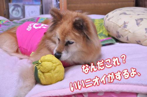 2011_12_23_001.jpg