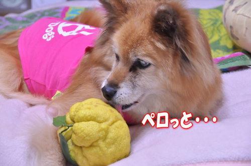 2011_12_23_002.jpg