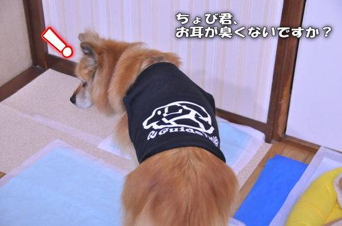 2011_12_26_001.jpg