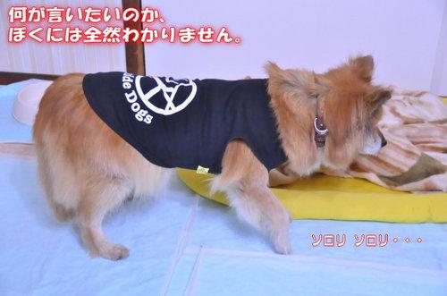 2011_12_26_002.jpg