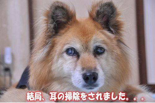 2011_12_26_003.jpg
