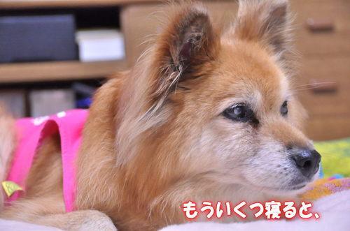 2011_12_27_001.jpg