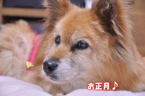 2011_12_27_002.jpg