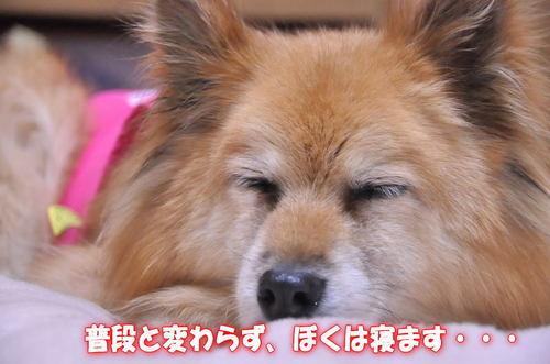 2011_12_27_004.jpg