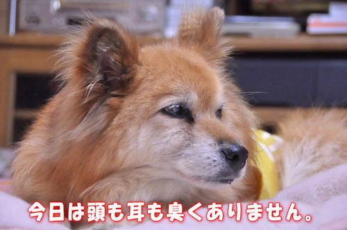 2011_12_28_001.jpg