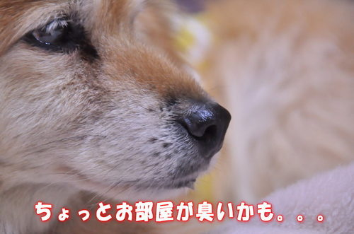 2011_12_28_003.jpg