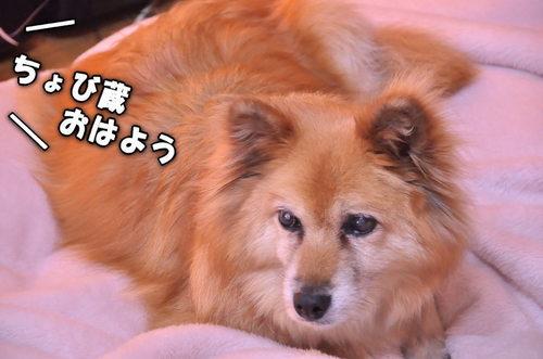 2011_12_30_001.jpg