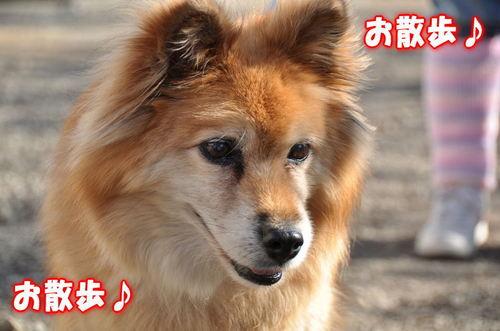 2011_12_30_002.jpg