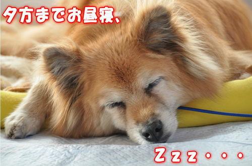 2011_12_30_003.jpg