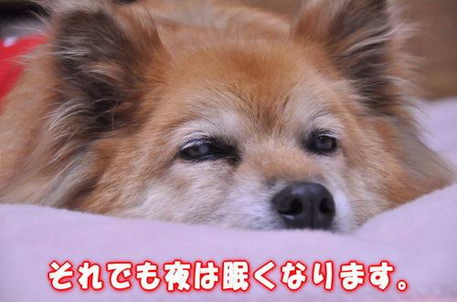 2011_12_30_004.jpg