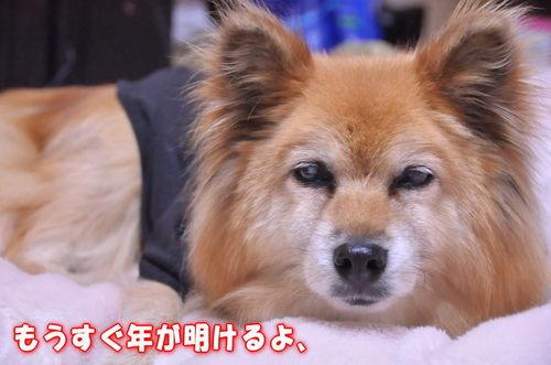 2011_12_31_001.jpg