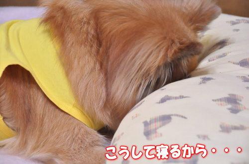 2012_01_27_003.jpg