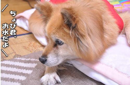 2012_01_30_001.jpg