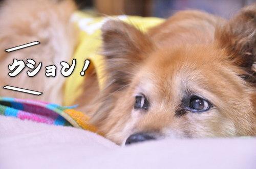2012_02_22_002.jpg