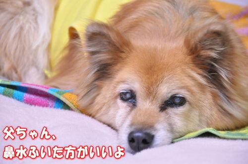 2012_02_22_003.jpg