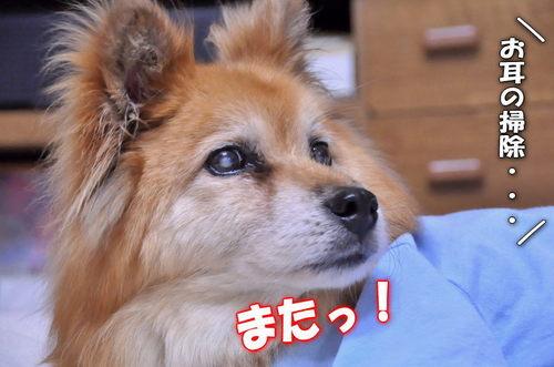 2012_03_04_003.jpg