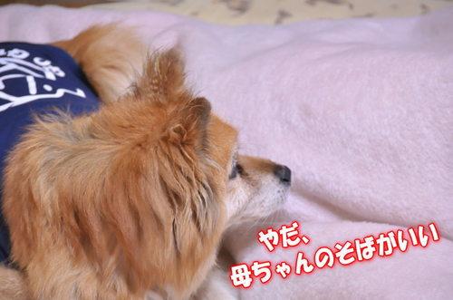 2012_03_23_002.jpg