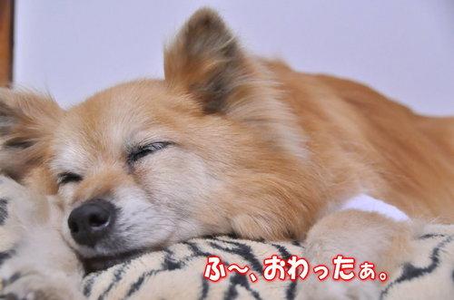 2012_05_23_002.jpg