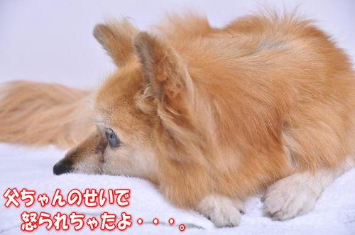 2012_06_22_003.jpg