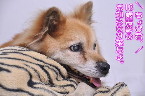 2012_07_10_001.jpg