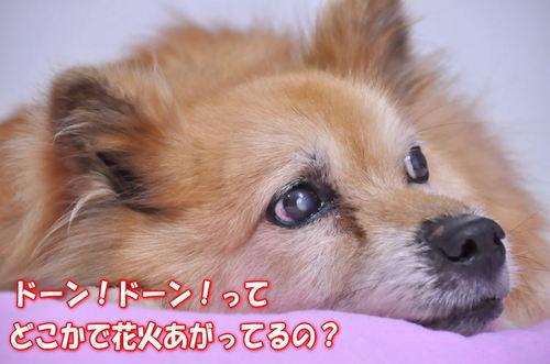 2012_08_09_002.jpg