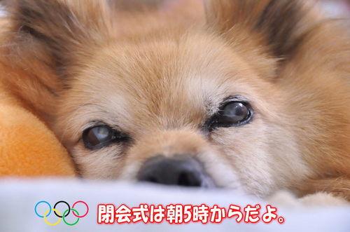 2012_08_12_001.jpg