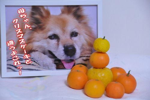 2012_12_24_001.jpg